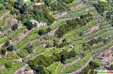 Corniglia: Weinterrassen