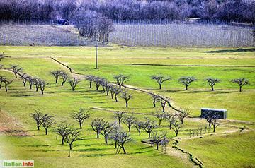 Schluderns: Obstgärten im Vinschgau