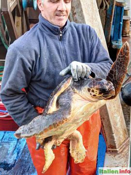 Trani: Fischer mit Meeresschildkröte