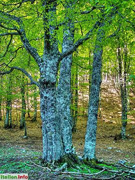 Viggianello: Belvedere di Malvento - Dichter Wald