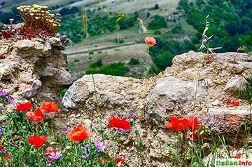 Tricarico: Wildblumen