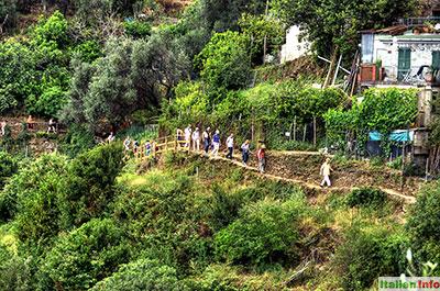 Monterosso al Mare: Wanderweg nach Vernazza
