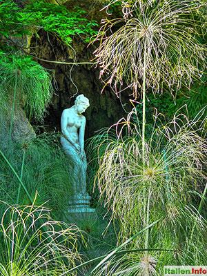 Ventimiglia: Botanischer Garten Hanbury - Papyrus
