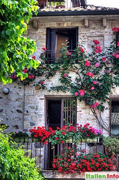 Sirmione: Blumenpracht