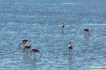 Trapani: Flamingos in den Salz-Lagunen
