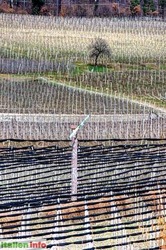 Eppan: Obstplantagen bei Montiggl