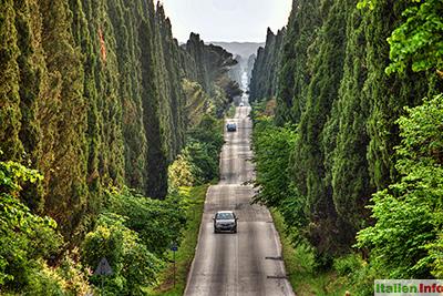 Bolgheri: Viale dei Cipressi - Zypressenallee