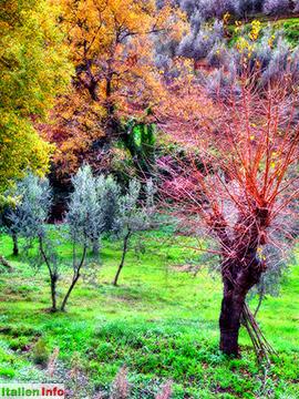 Gaiole in Chianti: Herbstliche Farbenpracht