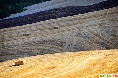 Asciano: Crete Senesi - Getreidefelder