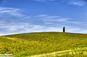 San Quirico d'Orcia: Einsame Zypresse