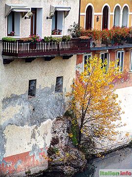 Bassano del Grappa: Brenta-Ufer mit einsamen Baum