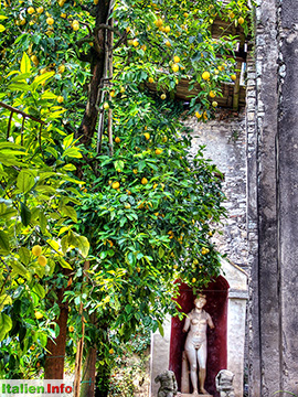 Garda: Punta San Vigilio - Zitronengarten