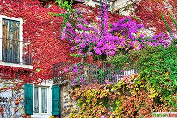 Torri del Benaco: Herbstfarbenpracht